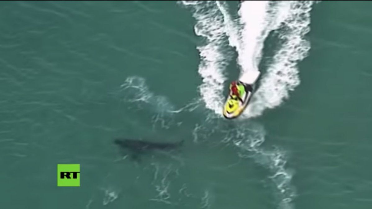 Un tiburón blanco mató de manera despiadada a un surfista en Australia